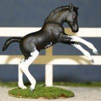 Unnamed Custom Foal