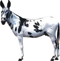 Muleycorn