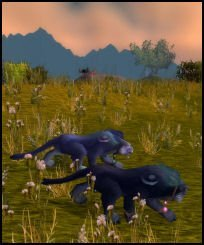 Prowling the Pridelands