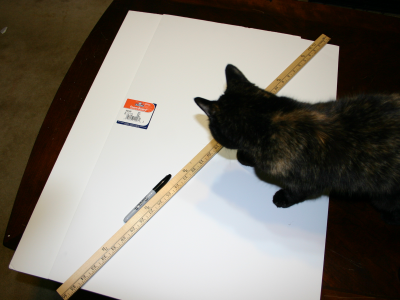 Homemade Lightbox - cat not required