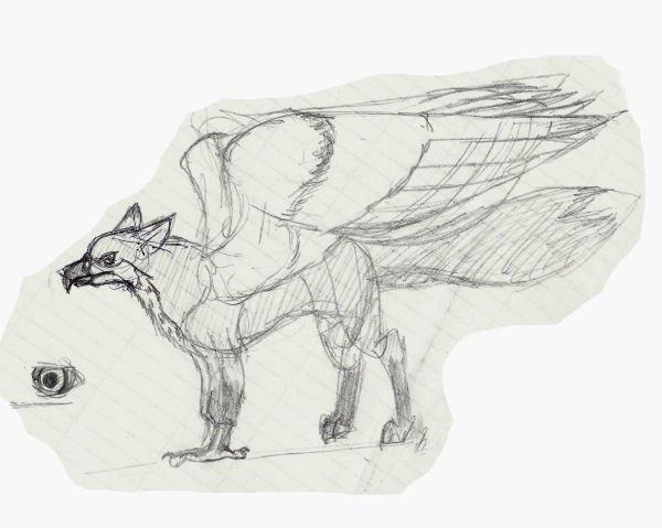 FoxHawk Doodle