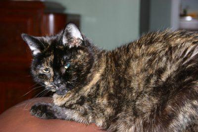 Dex Cat on the Sofa