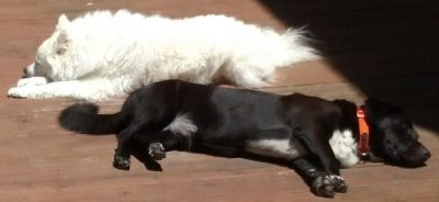 Draco and Shiva Sleeping on the Deck