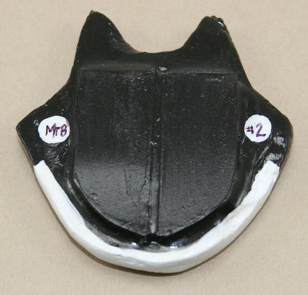 Black Tuxedo Flat Cat Head - Back