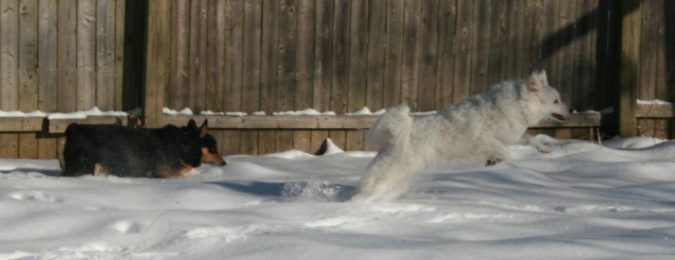 Shiva and Rocko racing in the snow