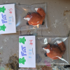 Fat Fox Magnets 004 005 - Martha Bechtel - Group shot