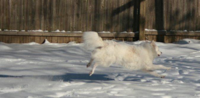 Shiva Running in the Snow
