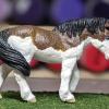 Mairzy Dapples - Custom Safari Ltd TOOB Walking Pony - Martha Bechtel - Grass