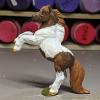 Rusty - Custom Safari Ltd TOOB Rearing Pony - Martha Bechtel - Left