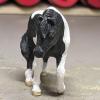 Buster - Custom Safari Ltd TOOB Walking Pony - Martha Bechtel - Nose
