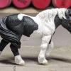 Buster - Custom Safari Ltd TOOB Walking Pony - Martha Bechtel - Right