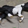 Buster - Custom Safari Ltd TOOB Walking Pony - Martha Bechtel - Tummy