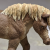 Ginger - Custom Safari Ltd TOOB Walking Pony - Martha Bechtel - Headshot