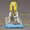 Gelbspritz - Custom Breyer Mini Whinnie Grazing Foal - Martha Bechtel - Nose