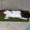 Lickitysplit - Custom Safari Ltd TOOB Running Pony - Martha Bechtel - Top